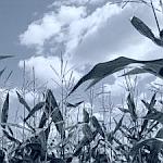 Agrar-Rohstoffpreise
